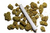 picture of mary jane  - Medicinal marijuana on white with a joint side lighting - JPG