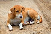pic of stray dog  - Stray dog with sad look is laying on the road - JPG