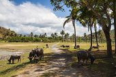 stock photo of sea cow  - Indian Cows near the Beach in nature daytime   - JPG