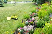 foto of celosia  - Planting new flowers in a spring garden with colorful yellow celosia seedlings on a lawn alongside a landscaped flowerbed of colorful ornamental and flowering plants - JPG