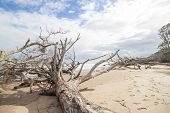 stock photo of driftwood  - Driftwood and footprints on beach with blue sky and clouds - JPG
