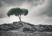 image of dead plant  - Conceptual image of green tree standing on ruins - JPG