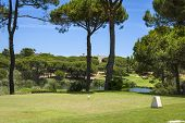 stock photo of vilamoura  - Golf course between pine trees without players Portugal - JPG