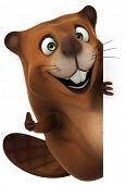 picture of beaver  - Beaver - JPG