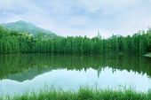 stock photo of inverted  - green trees with inverted image in lake - JPG