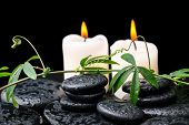 picture of tendril  - spa concept of green twig with tendril passionflower with drops and candles on zen basalt stones background closeup - JPG