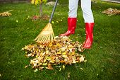 stock photo of woman boots  - Woman in red boots raking Fall leaves with rake - JPG
