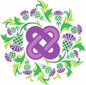picture of scottish thistle  - vector image Celtic knot surrounded by flowers thistle - JPG