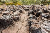 foto of lichenes  - Close - JPG