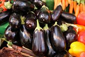 picture of farmer  - Aubergines  - JPG