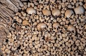 stock photo of catacombs  - Background made of human bones and skulls - JPG
