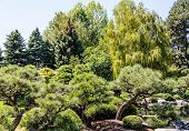 stock photo of weeping willow tree  - Evergreens and Weeping Willow Trees in a Public Park - JPG