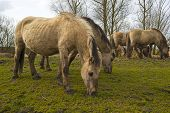 picture of herd horses  - Herd of horses in nature in a cloudy spring - JPG