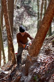 pic of man chainsaw  - Old man cutting trees using a chainsaw in the forest - JPG