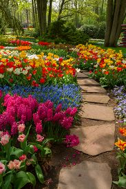 picture of violet flower  - Stone path winding in spring flower garden with blossoming tulip and hyacinth flowers - JPG