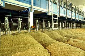 image of malt  - Industrial production of malt - JPG