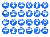 Blue Animals Icons poster