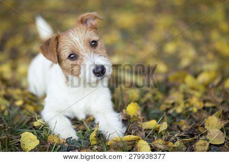 Pet Training Concept Cute Happy