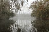stock photo of suwannee river  - Early Morning Mist on the Suwannee River  - JPG