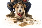 Funny Dirty Dog And Child. Jack Russell Dog And Boy Wearing Boots After Play In A Mud Puddle. Isolat poster