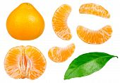 Isolated Tangerines Collection. Whole Tangerine Or Mandarin Orange Fruit And Peeled Segments Isolate poster