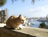 Relaxing Cat On Siesta Time, Cat Resting In Street On Sunny Day, Lazy Cat In The Street, Wild Kitten poster