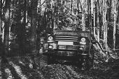 Dirty Offroad Cars With Fall Forest On Background, Defocused. Suv With Lights Turned On Path Covered poster