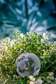 World Globe Crystal Glass On Green Leaves Bush. Environmental Conservation. World Environment Day. G poster