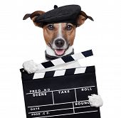 pic of puppy eyes  - movie clapper board director dog doing action - JPG