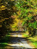 pic of ou  - The beatiful fall colors of trees down the driveway - JPG