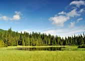 image of zakarpattia  - Mysterious Marichaika lake in the forest - JPG