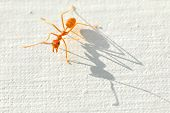 Ant And Shadow.