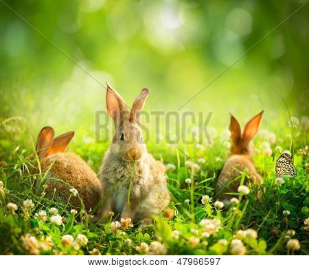 Rabbits. Beauty Art Design of Cute Little Easter Bunny in the Meadow. Spring Flowers and Green Grass poster