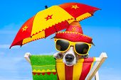 stock photo of mexican-dog  - mexican dog on vacation relaxing on a deck chair under an umbrella - JPG