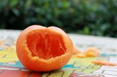 picture of opossum  - A Honey Mandarin Tangerine that was left outside on a table shows evidence of a little creature eating it at night - JPG