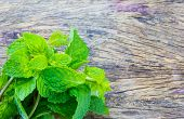 foto of peppermint  - A Fresh Peppermint on a wood texture - JPG