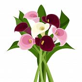 stock photo of calla  - Vector bouquet of purple - JPG