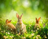 Rabbits. Beauty Art Design of Cute Little Easter Bunny in the Meadow. Spring Flowers and Green Grass. Sunbeams poster
