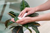 picture of disinfection  - A man taking care of a plant - JPG
