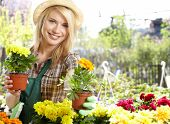 image of greenhouse  - Florists woman working with flowers at a greenhouse - JPG