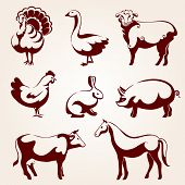 stock photo of husbandry  - Farm animals - JPG