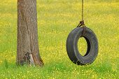 pic of tire swing  - Tire swing hanging from a white oak tree in a field of yellow wildflowers and grass - JPG