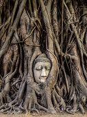 pic of shiva  - Head of Buddha statue in the tree roots at Wat Mahathat Ayutthaya Thailand - JPG