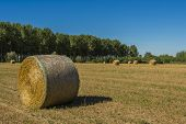 foto of threshing  - bales of hay in the field as soon as threshed - JPG