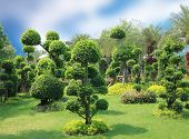 pic of bonsai  - Natural bonsai tree garden Lush green parks - JPG