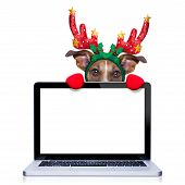 stock photo of christmas dog  - christmas dog with reindeer costume behind a laptop computer pc screen isolated on white background - JPG