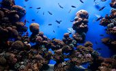 pic of saltwater fish  - Photo of a tropical fish on a coral reef in an aquarium - JPG