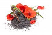 pic of poppy flower  - Poppy flower and poppy seed in wooden scoop - JPG
