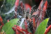foto of spider web  - A close up of the spider  - JPG