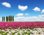 stock photo of buttercup  - Warm spring day - JPG